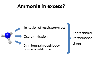 excess ammonia poultry house irritations burns litter decline in poultry performance
